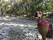 Comanche Lookout Park - Hiking with One of the Best Views in San Antonio - PLACES FOR PUPS