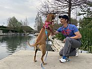 I Hiked the 15 Mile San Antonio Riverwalk with My Dog - Places for Pups