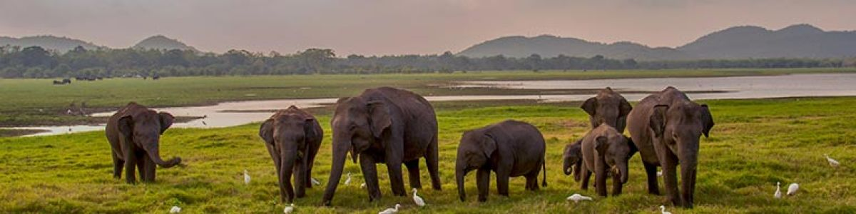 Headline for List of must-have experiences in Sri Lanka - Traverse magical landscapes