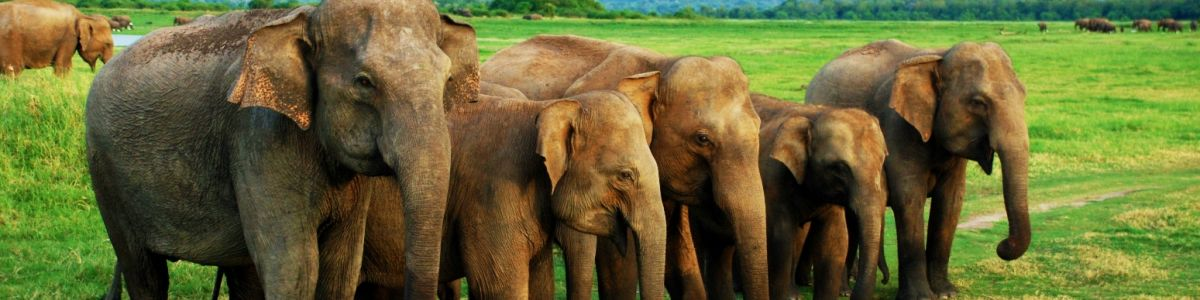 Headline for Top 05 National Parks to Visit in Sri Lanka – Exotic Havens