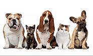 Leaving Town? Contact Pet Day Care for Dog Boarding-El Paso Texas