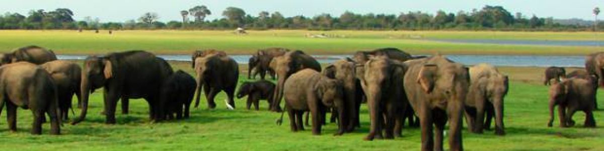 Headline for Wildest national parks to safari in Sri Lanka – an unending adventure