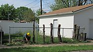 Tree Removal Sterling Heights MI - Branch Tree & Landscape Service
