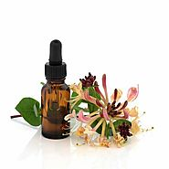 Buy Honeysuckle Floral Absolute Oil - Herbs Village