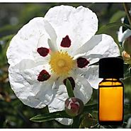 Buy Labdanum Floral Absolute Oil - Herbs Village