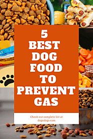 5 Best Dog Food to Prevent Gas