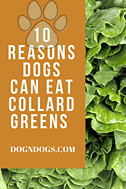 Dogs Can Eat Collard Greens