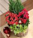 Winter Flower Basket | Christmas Flower Baskets | Bunches.co.uk