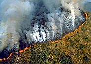 Lungs of Earth on Fire: 84% Increase in Fires of Amazon Rainforest