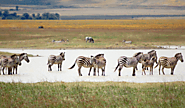 oNgorongoro Tarangire crater safari