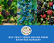 Buy Fruit Trees Online - Raintree Nursery