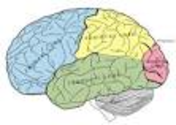 Brain dysfunction in multiple chemical sensitivity.