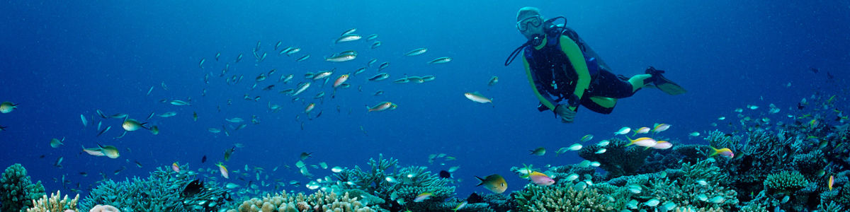 Headline for 8 Things Scuba Divers Need to Know - For your safety and to help preserve the underwater creatures and habitats.