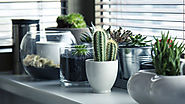 Plants inside the home that can clean the air in your home | SatWiky