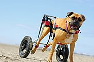 Purchasing a Wheelchair For Your Dog