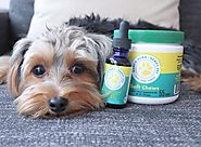 All You Want to Learn About Hemp-CBD for Pets!