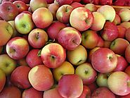 Apple Wholesale Supplier in India - (+91)-9811058860 – HARSHNA