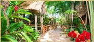Tranquilseas, Roatan, Honduras ~ Eco Lodge Accommodation, Diving, Boat Tours, Restaurant and Bar