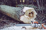 Call Tree Removal Service Vallejo For A Perfect Outdoor Retreat