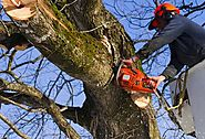 Professional Tree Removal Service in Vallejo