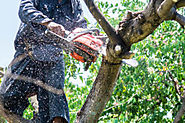 Why should you hire a Professional Tree Removal Service Provider?