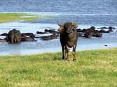 5. Minneriya National Park