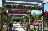 6 Recommendation To Locate The most effective Pergola Designs For Your Garden
