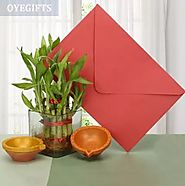 Order Plant Gifts for Diwali Online - OyeGifts