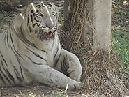 9 Lesser-Known Tiger Reserves in India - View Traveling