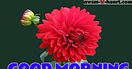 Good Morning Flowers Pictures | Good Morning Images with Flowers HD | AwsmHeart - Collection of Latest Hindi Shayari ...