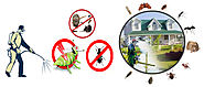 How does pest control services effective in exterminating termites? - Orange Pages