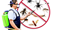 How to choose pest control services for your property?
