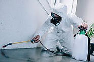 Is Approaching Pest Control Company Beneficial To The Wellbeing? - Home Improvements AU