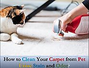 How to clean your carpet from pet urine stain and odor