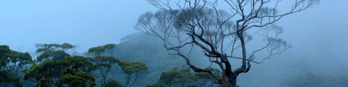 Headline for 7 Amazing Facts about Rainforests - Seven Fascinating Aspects of Rainforests