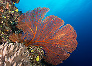 Fiji Scuba diving packages in Fiji