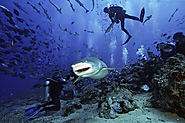 How to Do Diving in Fiji under Low Budget?