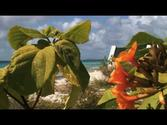 "Bonaire Video: ""Take a Tour of Bonaire"""