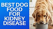 🐕 Best Dog Food For Kidney Disease