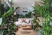 'Biophilia': How to turn your indoor spaces into leafy havens | Bournemouth Echo