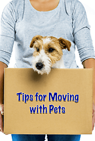 Most Essential Tips for Moving with Pets By Mover Services in Singapore
