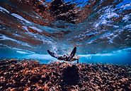 Stunning Under Water Attractions