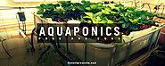 14 Pros and Cons of Aquaponics - Honest Pros & Cons