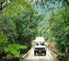 Experience the Daintree Rainforest