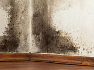 Why Lookout for Mould When Buying a Home - Vital Building and Pest Inspections