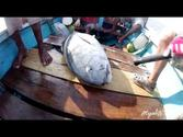 Fishing giant GT at Indonesia-Alor Archipelago (Trailer)