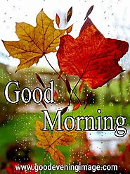 Good Morning images with rain | good morning wishes with rain