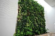 How SMEs Can (Affordably) Incorporate Biophilic Design Into Their Offices
