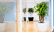 How To Make Your Office A Greener Place | Jupps Floor Coverings
