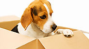 Website at http://packers-movers.mystrikingly.com/blog/safety-while-moving-with-pets